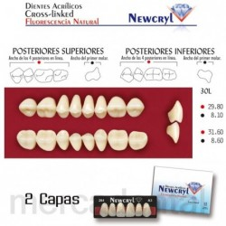Dientes Newcryl-Vita 2D Lo B3