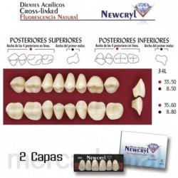 Dientes Newcryl-Vita 26 Lo B2