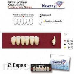 Dientes Newcryl-Vita 266 Up C2