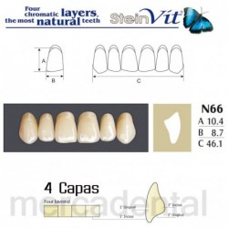Dientes Newcryl-Vita 2D Up B2
